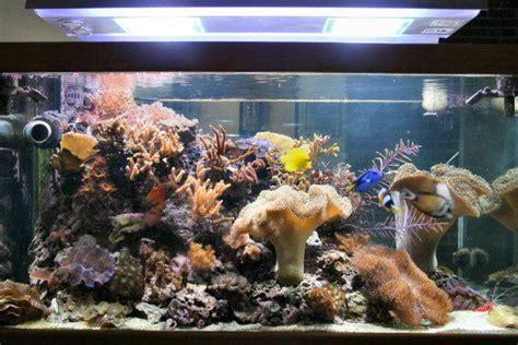 quel diam 232 tre de descente pour un nano de 60 litres aquarium r 233 cifal aquarium marin
