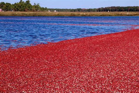 3 Of The Best Cranberry Bog Tours In Cape Cod