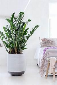 Große Zimmerpflanzen Pflegeleicht : grote kamerplanten ~ Markanthonyermac.com Haus und Dekorationen