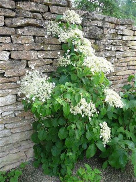 les 25 meilleures id 233 es concernant plante grimpante ombre sur spot terrasse fleur
