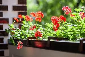 Ideale Luftfeuchtigkeit Raum : bl tenpracht auf dem balkon ideale sorten f r ein pflanzenparadies auf kleinem raum ~ Markanthonyermac.com Haus und Dekorationen