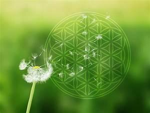 Blume Des Lebens Fensterbild : pusteblume mit blume des lebens auf alu dibond f r aussen ~ Markanthonyermac.com Haus und Dekorationen
