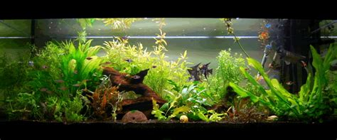 id 233 e d 233 coration aquarium eau douce esth 233 tique