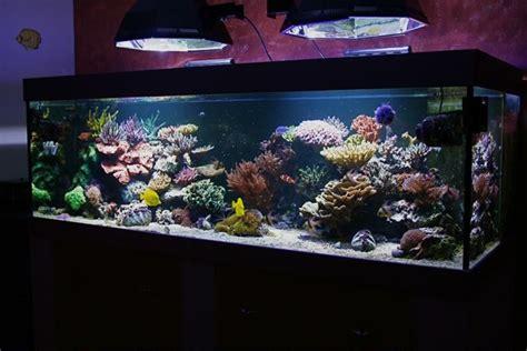 aquariophilie forum recifal aquarium eau de mer forum redseamax 130 250 et 500 le reef de