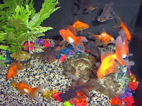 aquarium eau douce ou eau froide