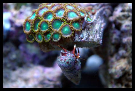 les coraux et l 233 clairage de l aquarium d eau de mer webnature fr