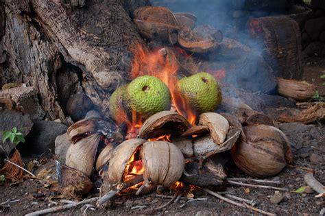 fruit de l arbre 224 les marquises