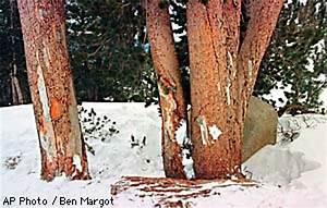 PAGE ONE -- Investigators Hunt Clues in Bono Ski Death ...