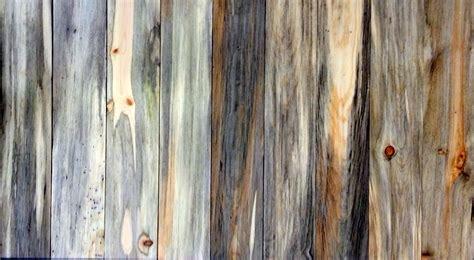 beetle kill pine q a sustainable lumber company
