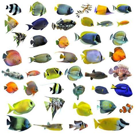 poisson tropicaux liste poisson naturel