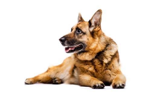 mon chien fait pipi dans la maison comportement du chien education chiens