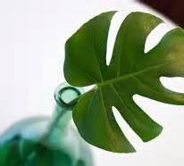 Pflanzen Zu Hause : haben sie exotische pflanzen zu hause eine au ergew hnliche deko ~ Markanthonyermac.com Haus und Dekorationen