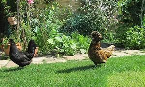Hühner Im Garten : h hner im garten honeyfarm nat rlich leben und genie en ~ Markanthonyermac.com Haus und Dekorationen