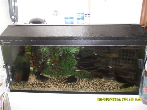 aquarium complete with fish for sale southton hshire pets4homes