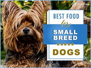 7 Best Foods to Feed a Small Breed Dog