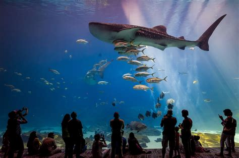 best aquariums in the u s tripping