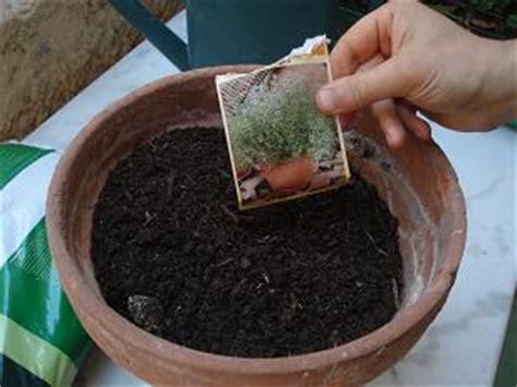 faire pousser du thym sur balcon