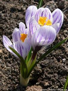 Garten Was Tun Im März : gartenarbeiten im m rz ~ Markanthonyermac.com Haus und Dekorationen