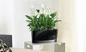 Pflanzen Für Wohnzimmer : wohnzimmerambiente durch pflanzen aufwerten ~ Markanthonyermac.com Haus und Dekorationen