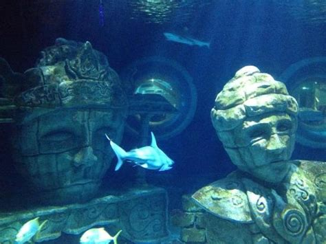 picture of aquarium sea val d europe marne la vallee tripadvisor