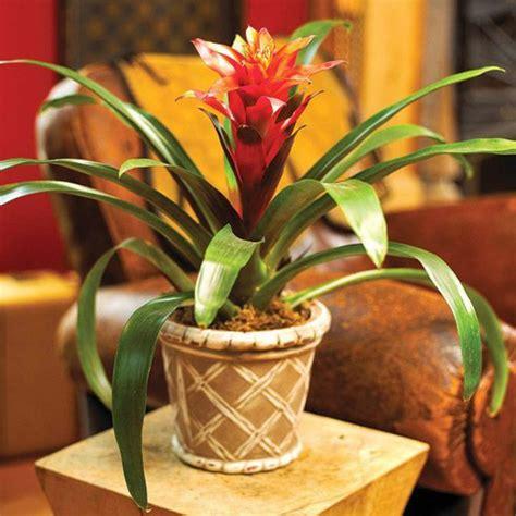 plante interieur et verte map titecagne