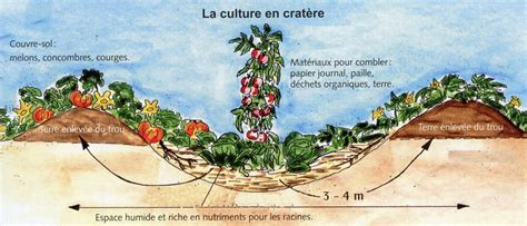 planter des aubergines jardiner avec jean paul