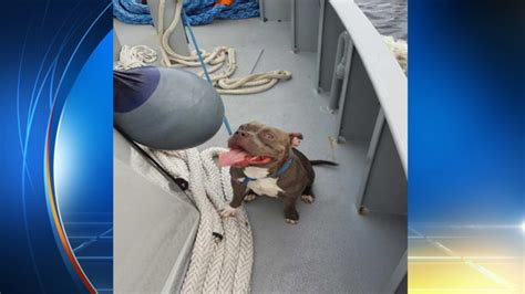 Dog Boat Captain by Boat Captain Rescues Dog Found Swimming In New River