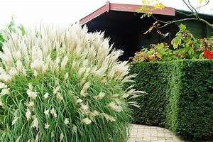 Alternative Zu Gras Garten : ziergr ser im garten pflanzen pflegen ~ Markanthonyermac.com Haus und Dekorationen