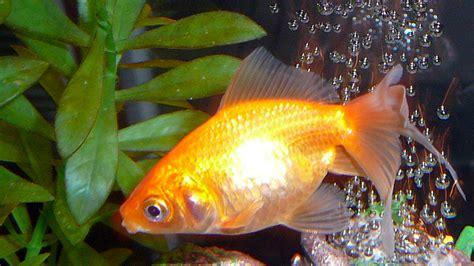 aquarium trop petit pour poisson acheter un aquarium pour poisson photo d coration