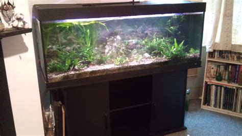 juwel 450 set up at aquarist classifieds