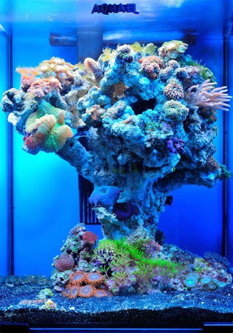 154 best awesome reef aquascapes images on reef aquarium aquarium ideas and marine