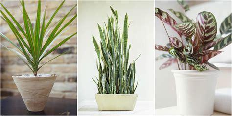best plants for bathroom no light 100 images 100 best plants for bathroom no light 6