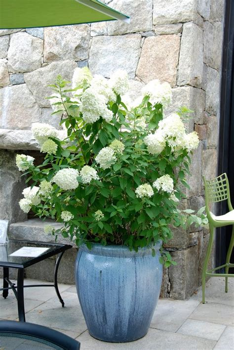 44 best shrubs for containers best container gardening plants page 3 of 4 balcony garden web