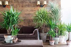 Palmen Für Die Wohnung : die besten zimmerpflanzen f r deine wohnung ~ Markanthonyermac.com Haus und Dekorationen
