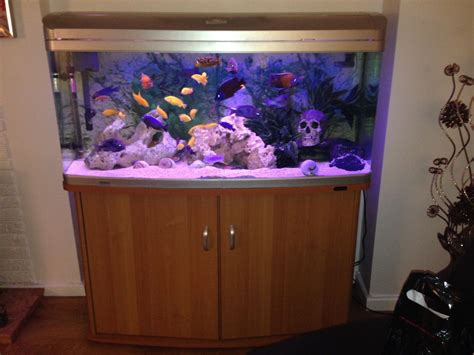 300 litre aqua one 1230xl aquarium and fish sheffield south pets4homes
