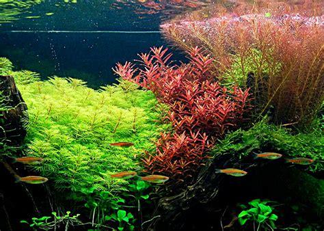 vente plante aquarium poisson naturel