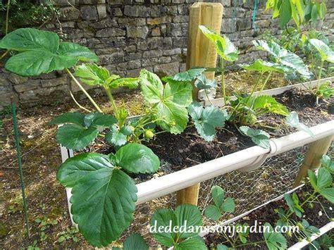 comment faire pousser des fraises en hauteur d 233 d 233 dans jardin jardin