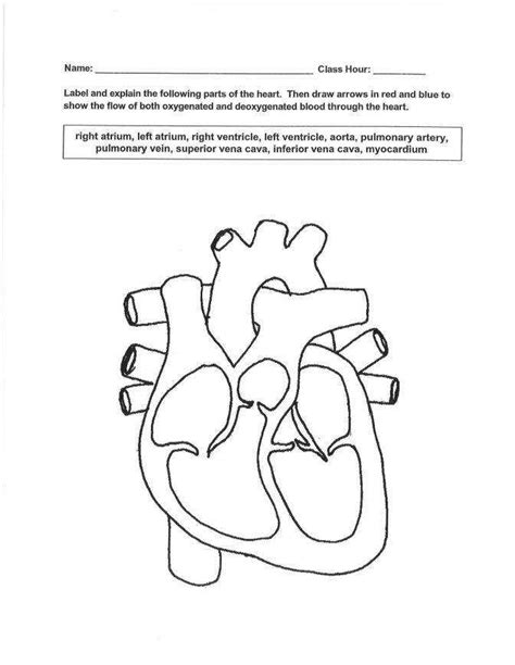 The Circulatory System Worksheet Homeschooldressagecom