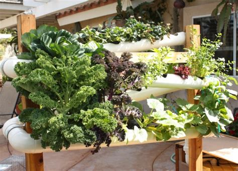 Best + Hydroponic Gardening Ideas On Pinterest