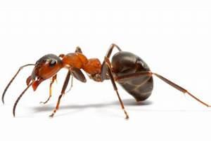 Hilft Mehl Gegen Ameisen : was hilft gegen ameisen auf der terrasse hilfreiche ideen ~ Whattoseeinmadrid.com Haus und Dekorationen