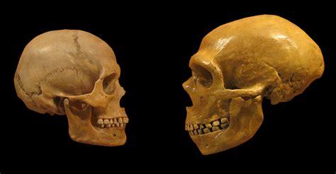 evolution may deleted neanderthal dna isu semasa semasa forum cari infonet