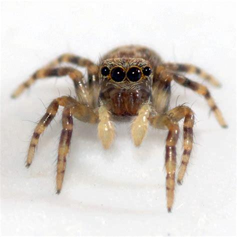 comment lutter contre les araign 233 es dans la maison