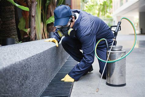 Hire Environmentaly Friendly Pest Control Companies The