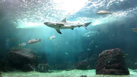 guadeloupe le gosier aquarium des requins