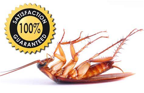 Ecofriendly Bay Area Pest Control & Treatment  Planet Orange