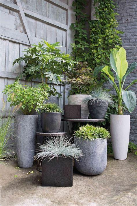 17 meilleures id 233 es 224 propos de arbuste en pot sur