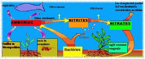 aquariophilie pratique le cycle azot 233 en images