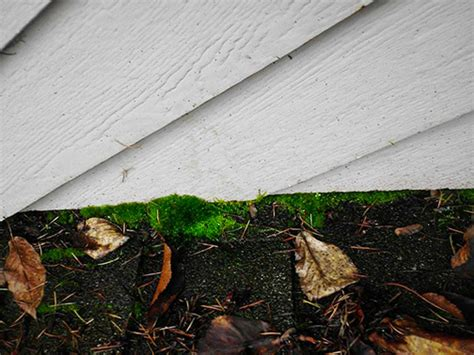 Moss And Algae Stains On Your Roof