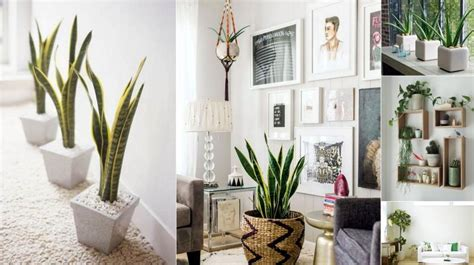 6 Creative Ways To Include Indoor Plants Into Your Home Décor