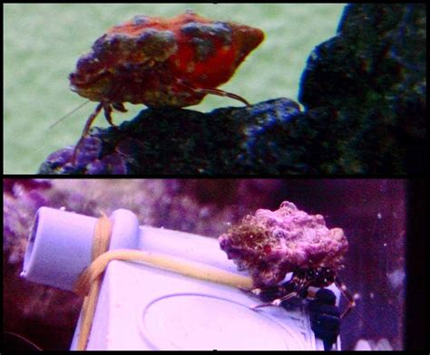 mon 1er aquarium r 233 cifal forum poissons r 233 cifaux